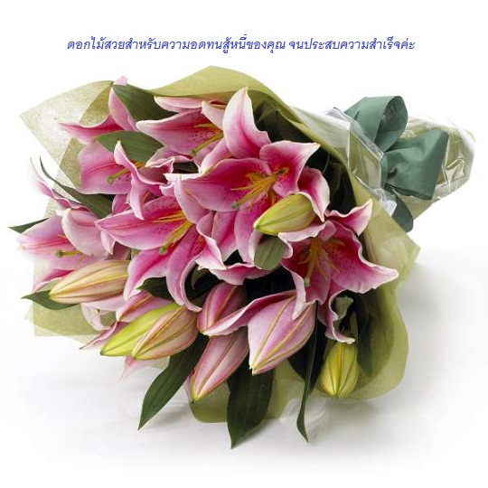 Pink_Oriental_Lilies.jpg
