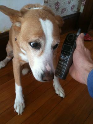 DogAnswersPhone.jpg
